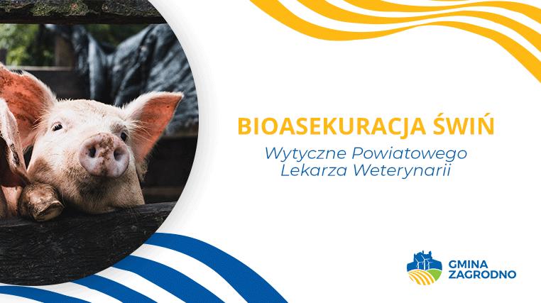 bioasekuracja świń
